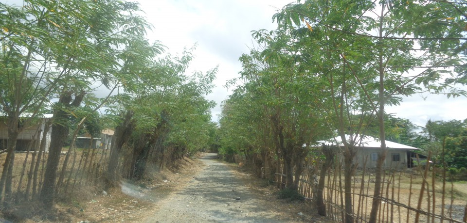 FOR SALE: Lot / Land / Farm Pangasinan 8
