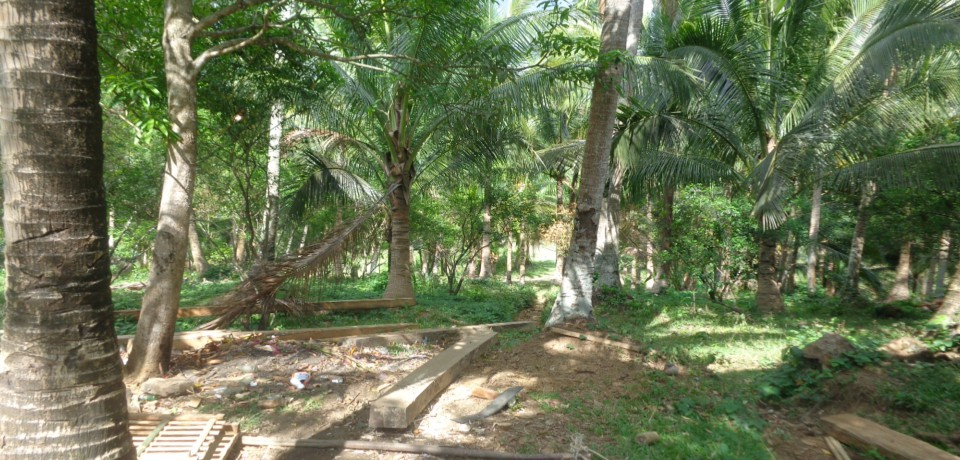 FOR SALE: Lot / Land / Farm Camarines Norte 6