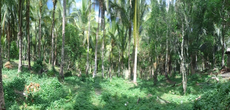 FOR SALE: Lot / Land / Farm Camarines Norte 8