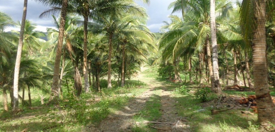 FOR SALE: Lot / Land / Farm Camarines Norte 9