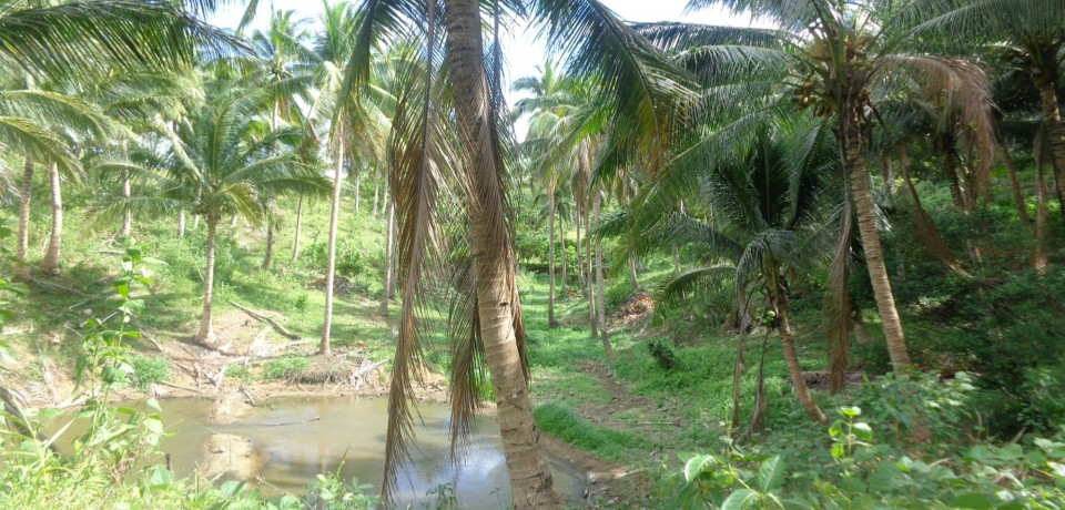 FOR SALE: Lot / Land / Farm Camarines Norte 10