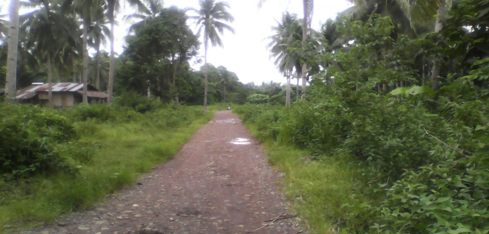 FOR SALE: Lot / Land / Farm Abra 4