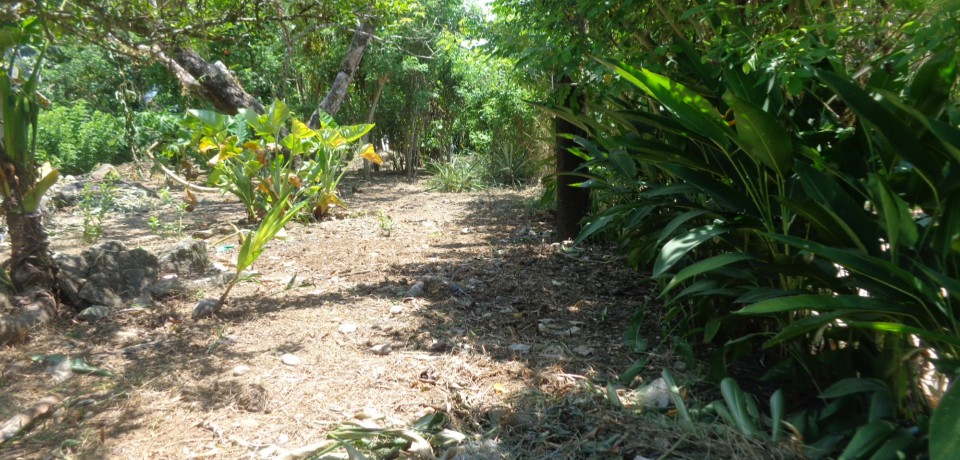 FOR SALE: Lot / Land / Farm Camarines Norte