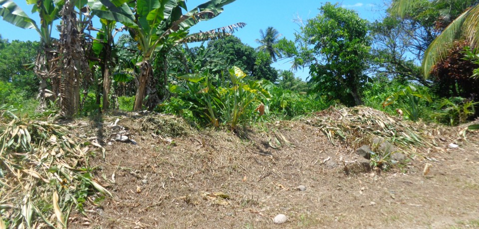 FOR SALE: Lot / Land / Farm Camarines Norte 1