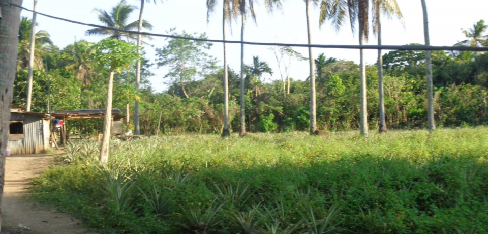 FOR SALE: Lot / Land / Farm Abra