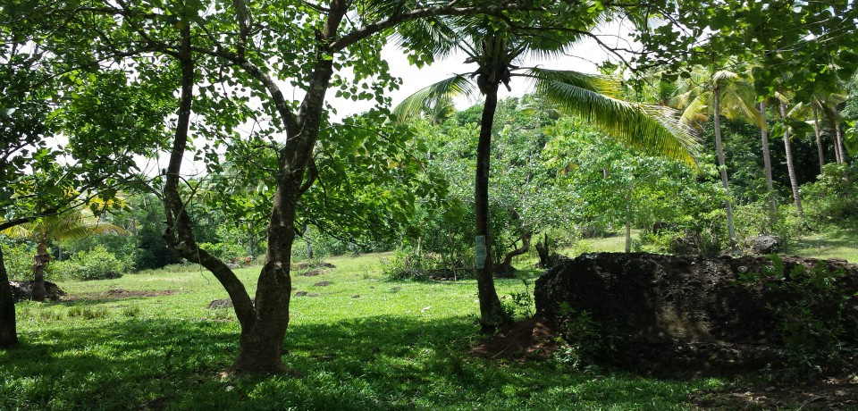 FOR SALE: Lot / Land / Farm Sorsogon
