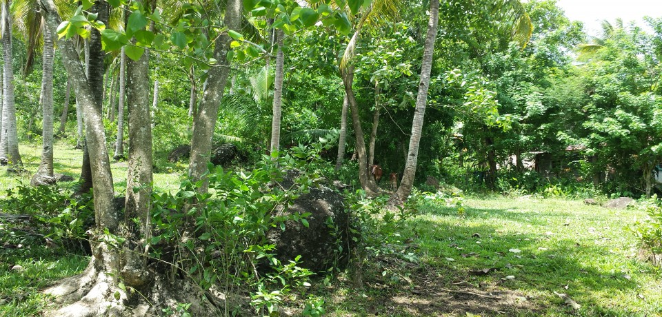 FOR SALE: Lot / Land / Farm Sorsogon 1