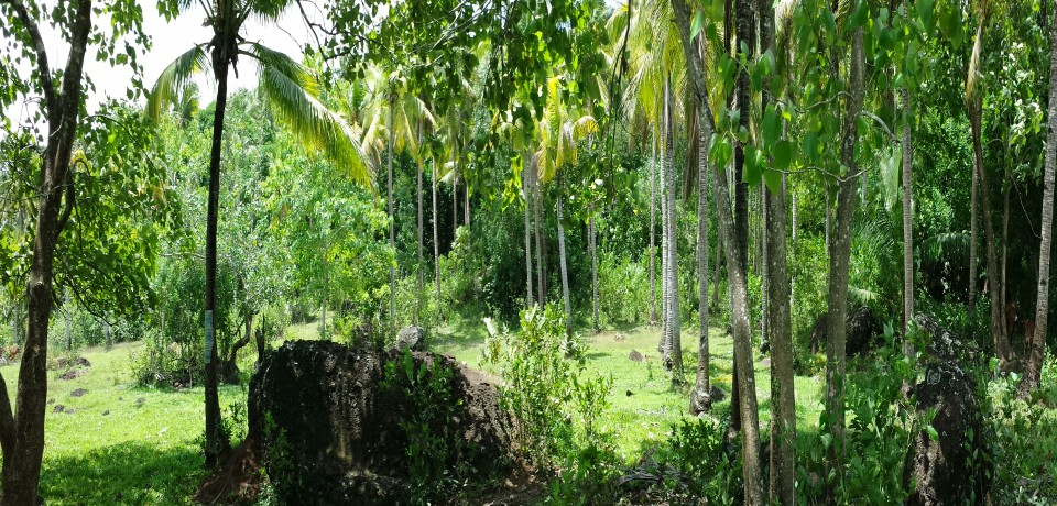 FOR SALE: Lot / Land / Farm Sorsogon 2