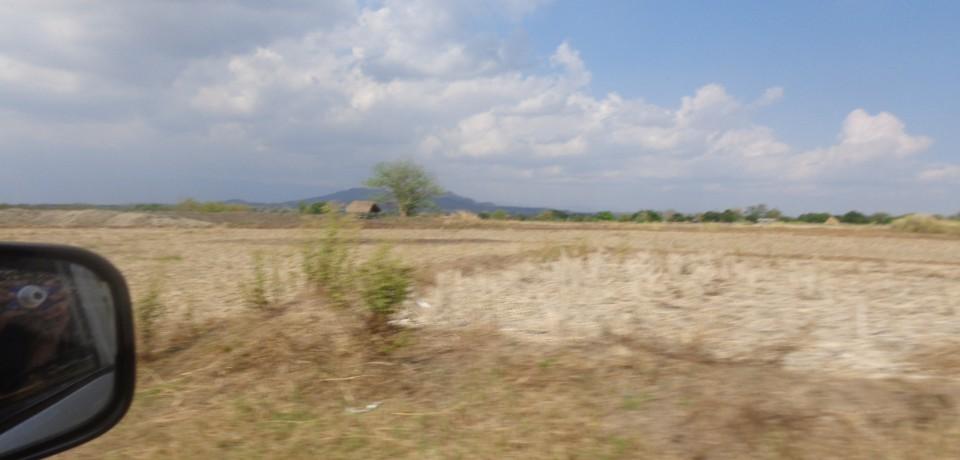 FOR SALE: Lot / Land / Farm Nueva Ecija 2
