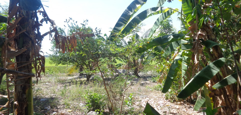 FOR SALE: Lot / Land / Farm Pampanga 9