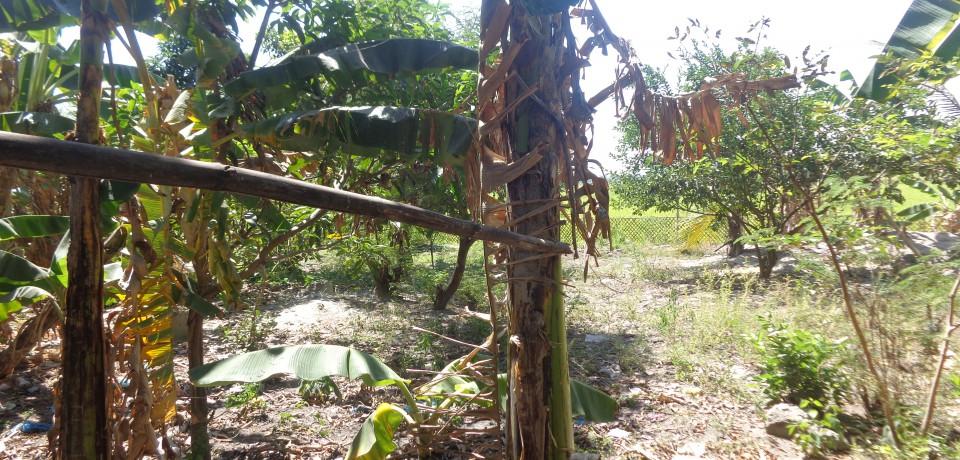 FOR SALE: Lot / Land / Farm Pampanga 8