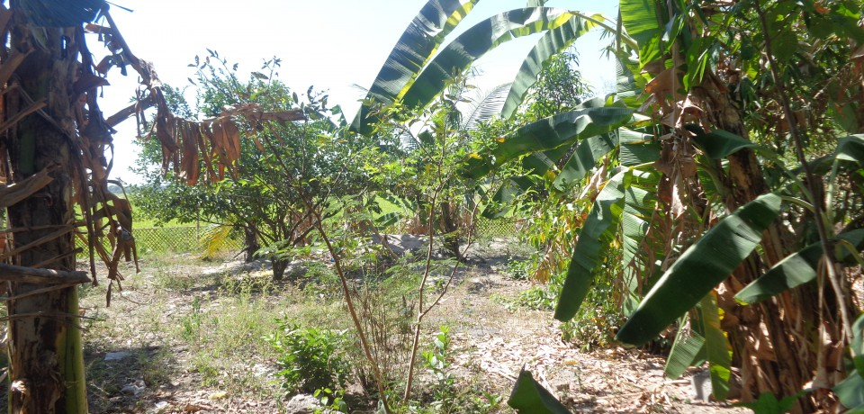 FOR SALE: Lot / Land / Farm Pampanga 7