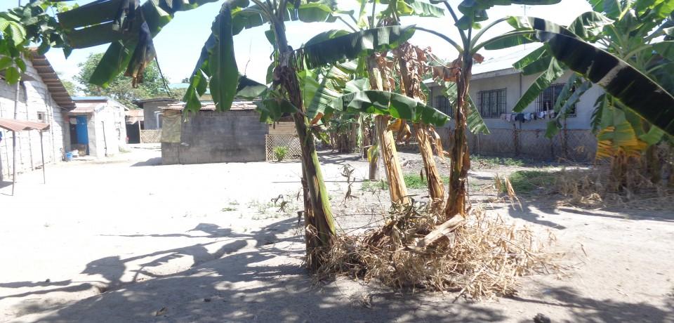 FOR SALE: Lot / Land / Farm Pampanga 5