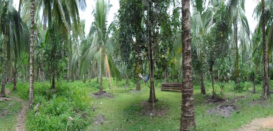 FOR SALE: Lot / Land / Farm Leyte 0