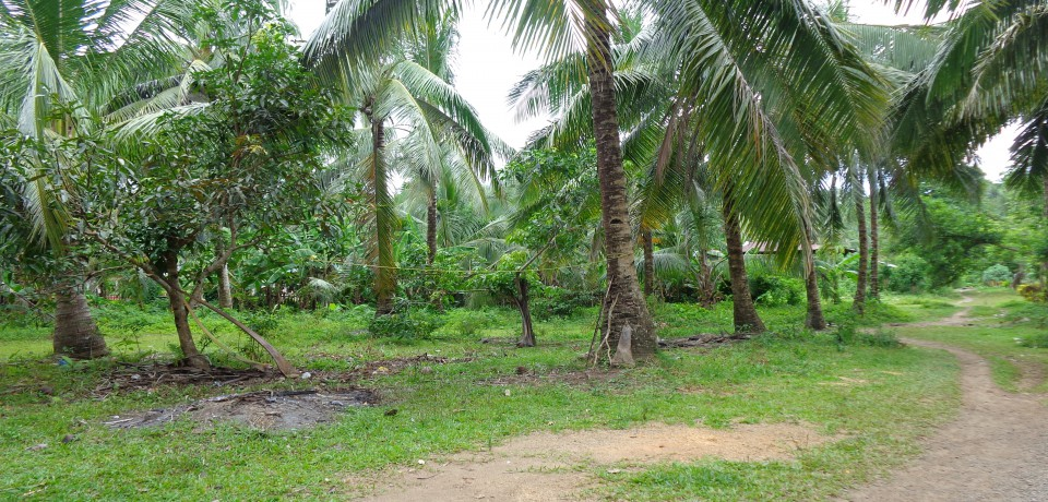 FOR SALE: Lot / Land / Farm Leyte 1
