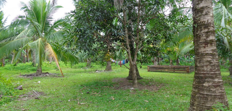 FOR SALE: Lot / Land / Farm Leyte 2