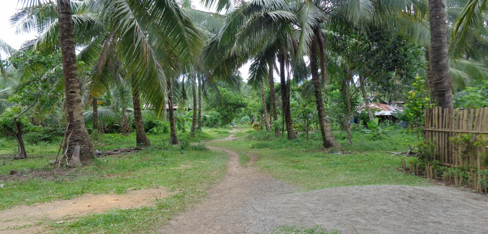 FOR SALE: Lot / Land / Farm Leyte 4