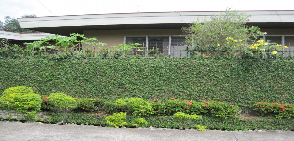 FOR SALE: House Negros Occidental 1