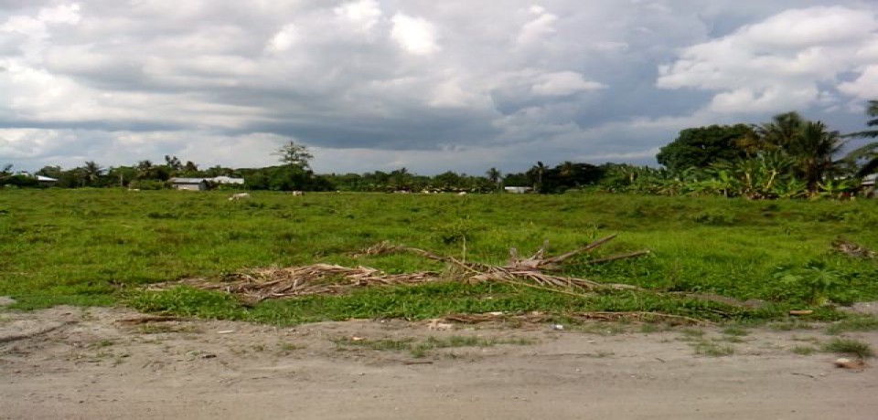 FOR SALE: Lot / Land / Farm Sultan Kudarat 2
