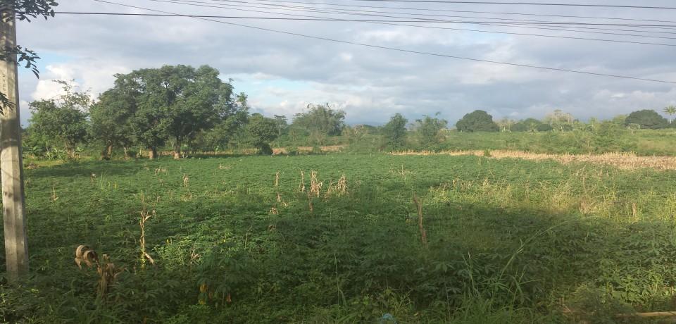 FOR SALE: Lot / Land / Farm Misamis Oriental 3