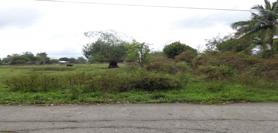 FOR SALE: Lot / Land / Farm Isabela