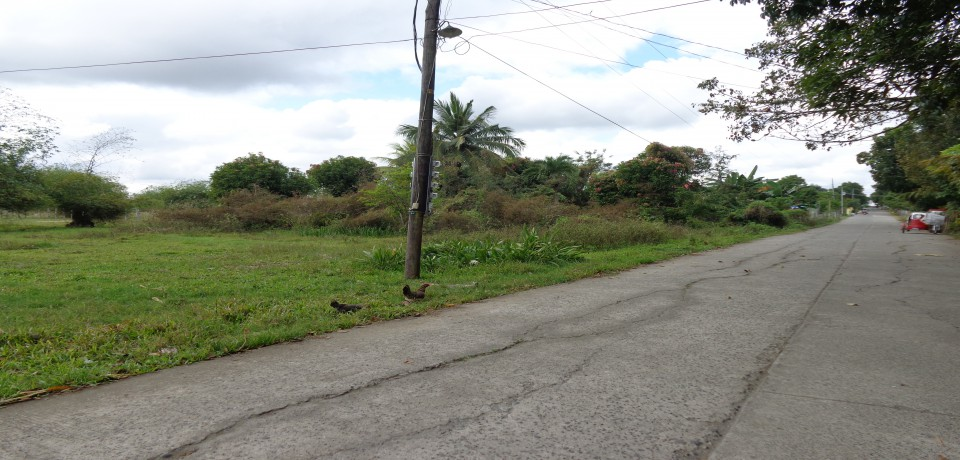 FOR SALE: Lot / Land / Farm Isabela 2