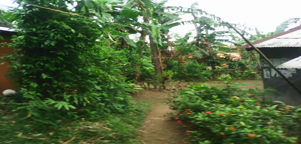 FOR SALE: Lot / Land / Farm Quezon 5