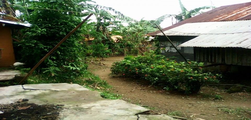 FOR SALE: Lot / Land / Farm Quezon 7
