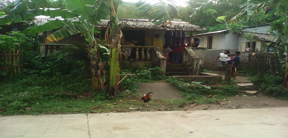 FOR SALE: Lot / Land / Farm Quezon 10