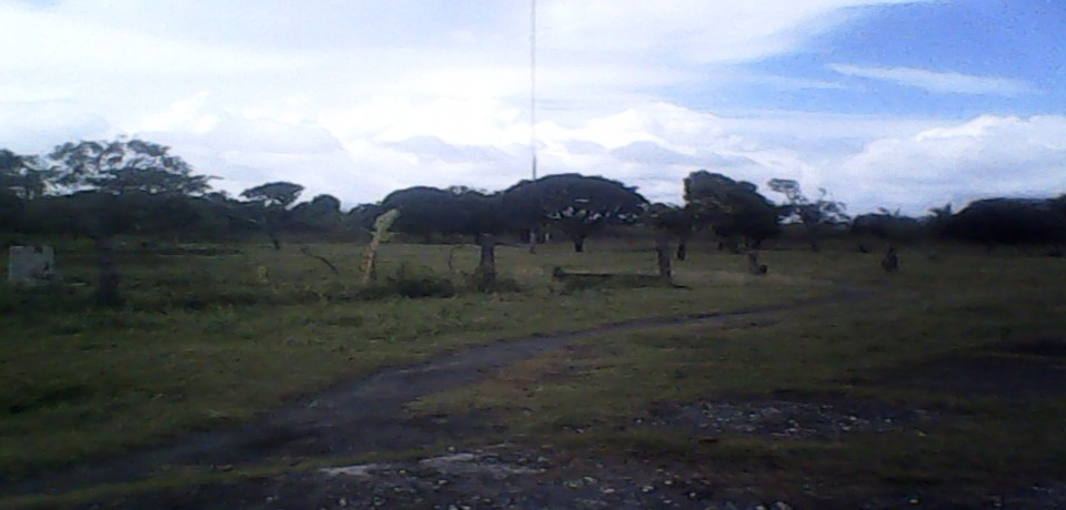 FOR SALE: Lot / Land / Farm Mindoro Oriental 2