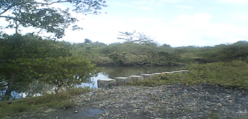 FOR SALE: Lot / Land / Farm Mindoro Oriental 7