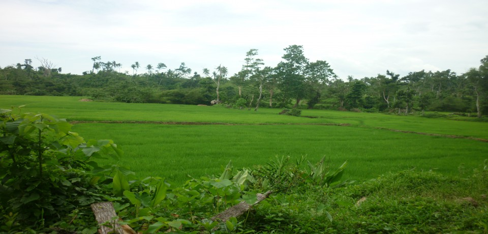 FOR SALE: Lot / Land / Farm Capiz