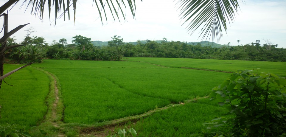 FOR SALE: Lot / Land / Farm Capiz 1