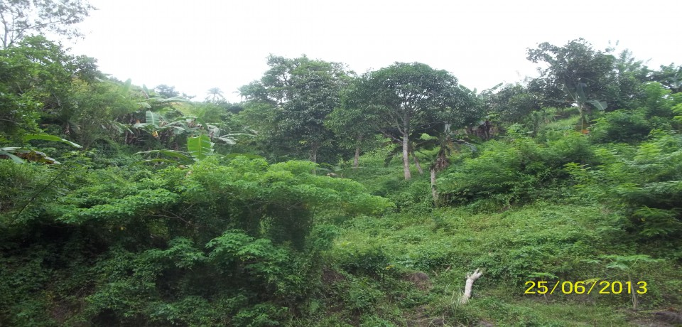 FOR SALE: Lot / Land / Farm Negros Occidental