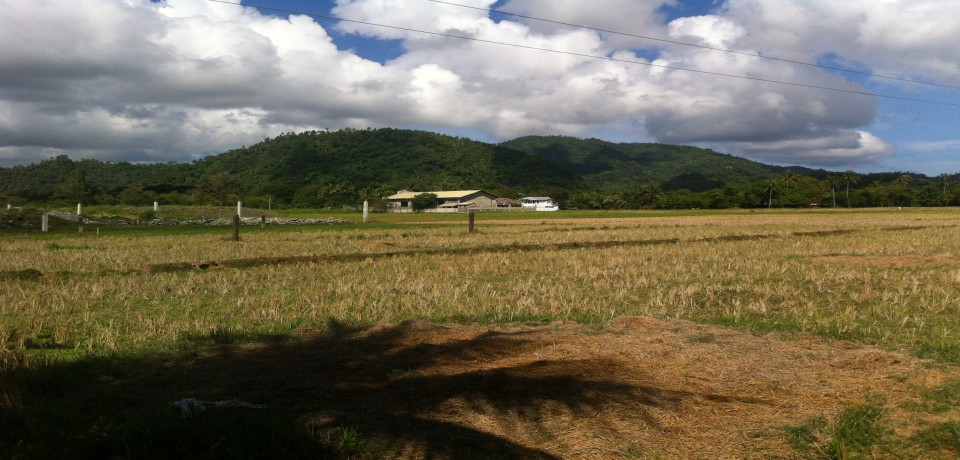 FOR SALE: Lot / Land / Farm Surigao del Norte 2