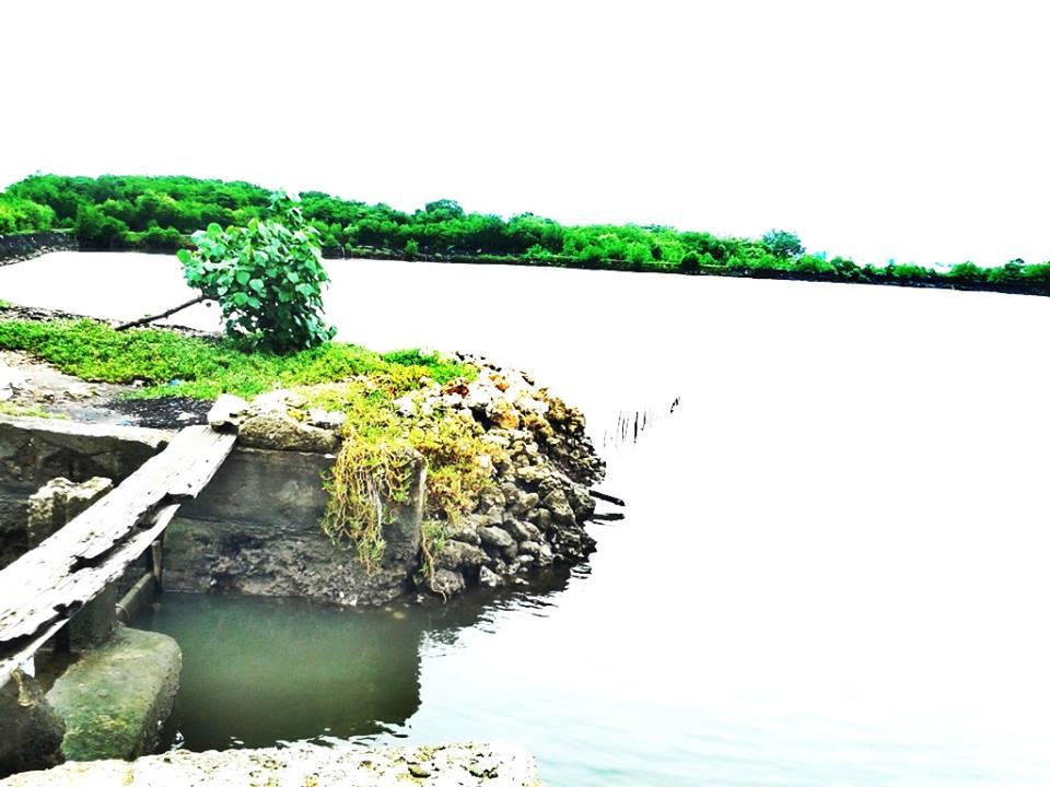 FOR SALE: Lot / Land / Farm Cebu > Mactan 3