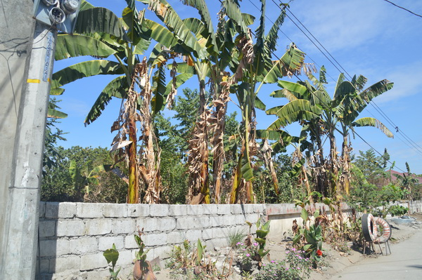 FOR SALE: Lot / Land / Farm Pampanga > Angeles City 2