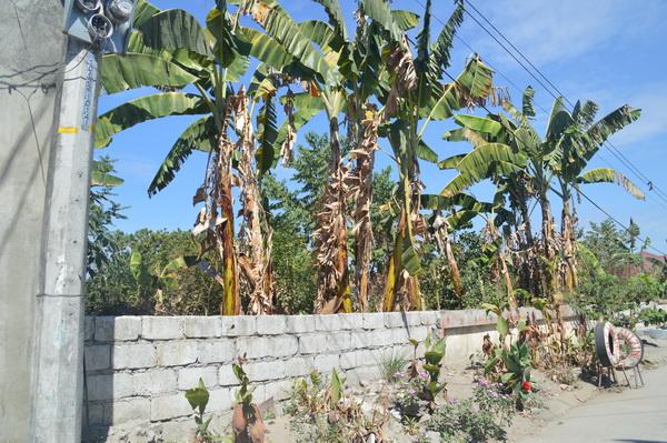 FOR SALE: Lot / Land / Farm Pampanga > Angeles City 1