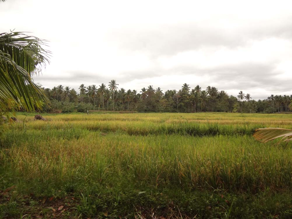 Farm For Sale in Calinan, Davao City