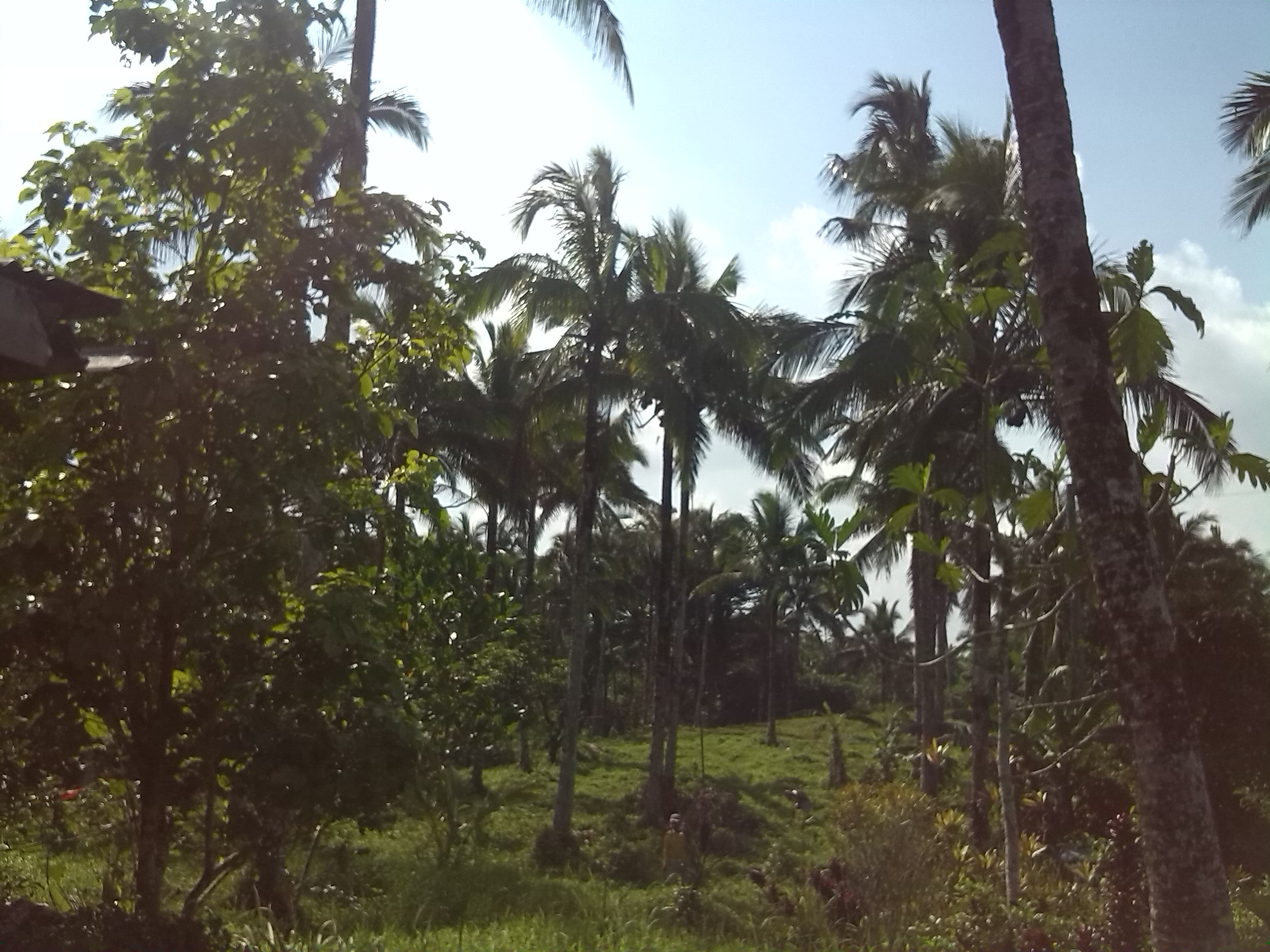 FOR SALE: Lot / Land / Farm Quezon 1