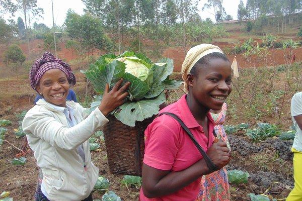 DR Kongo LAV odling.jpg