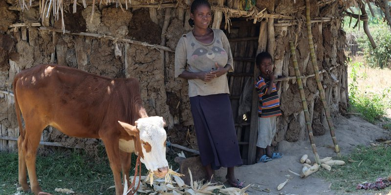 Etiopien Ko- och getprojekt.jpg