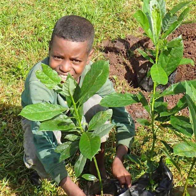 Trädplantering pojke