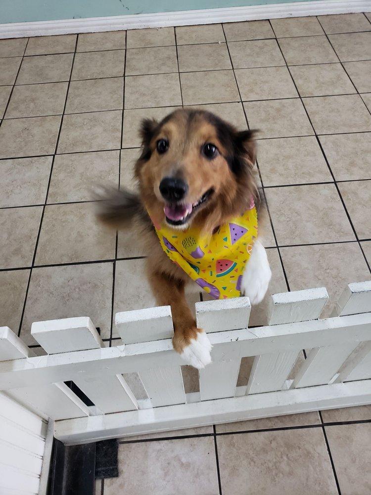 Puppy Love Pet Groomers Pet Grooming Arlington Tx Barxie