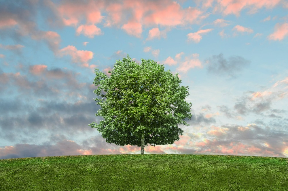 Changing Consumer Habits With Sustainability in Mind