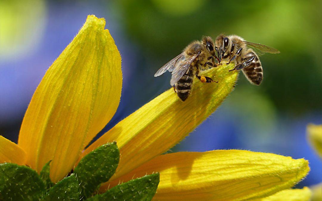 World Bee Day 2021 Activities