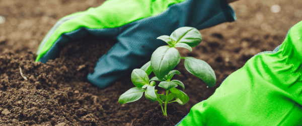Sustainable Gardening – Seeding Bulbs, Plants & Flowers
