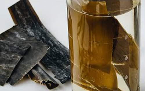 Alghe Kombu per Sushi e uso alimentare