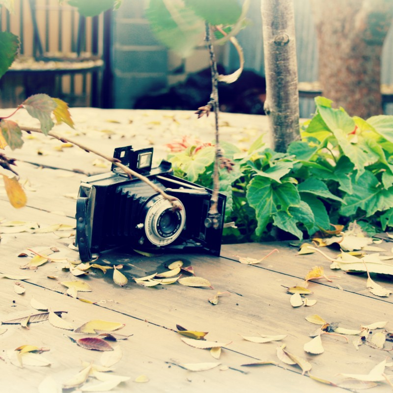 image: Gimcana fotogràfica