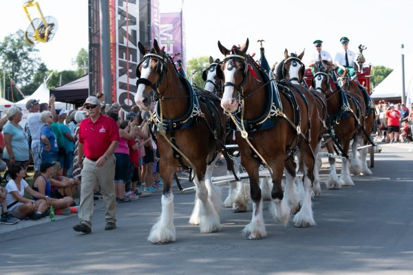 2019 Clydesdales